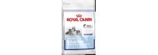 Royal Canin 2 x Maxi Starter - Mother and Babydog 15kg (30kg)
